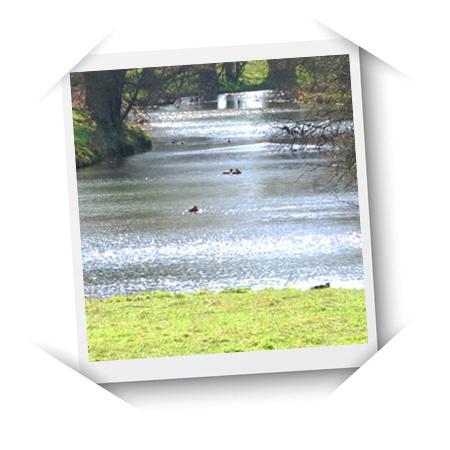 River Beane Restoration Association