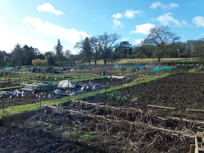 Allotments in Watton
